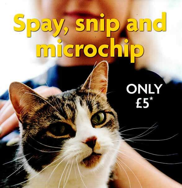 Cats Spayed, Snipped and Microchipped for £5 RSPCA Coventry