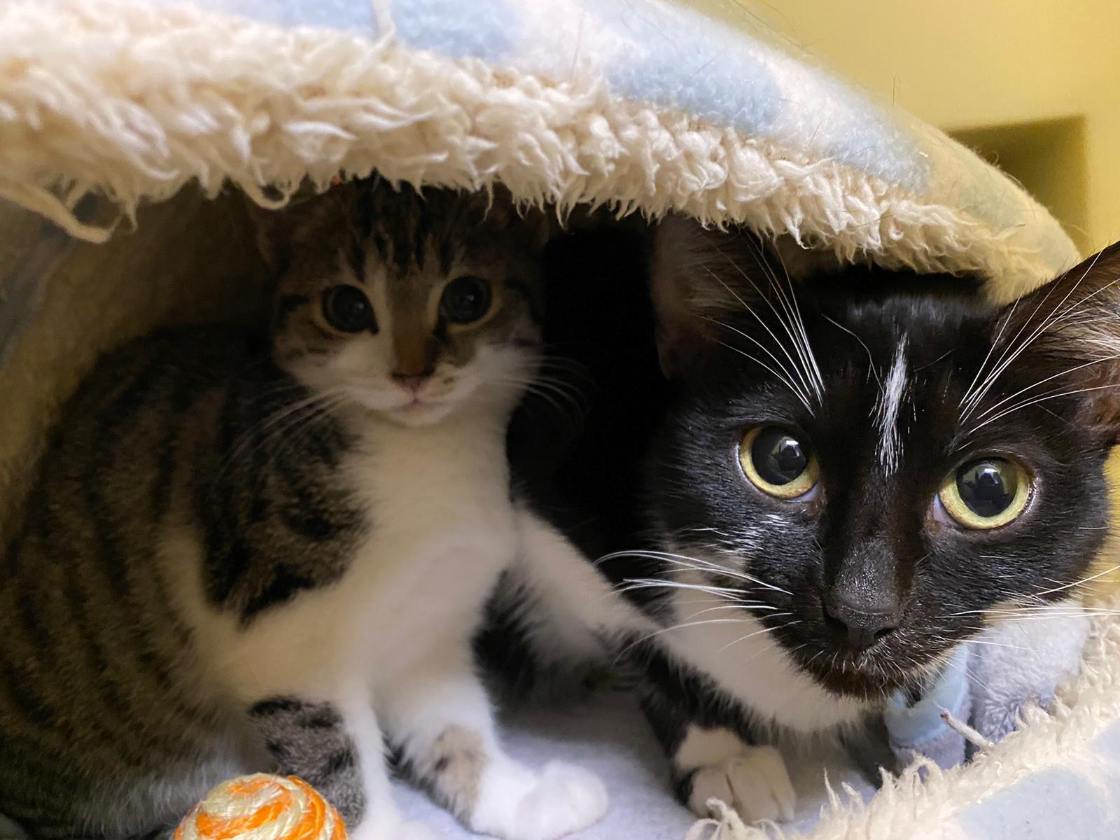 Mum &Kitten
