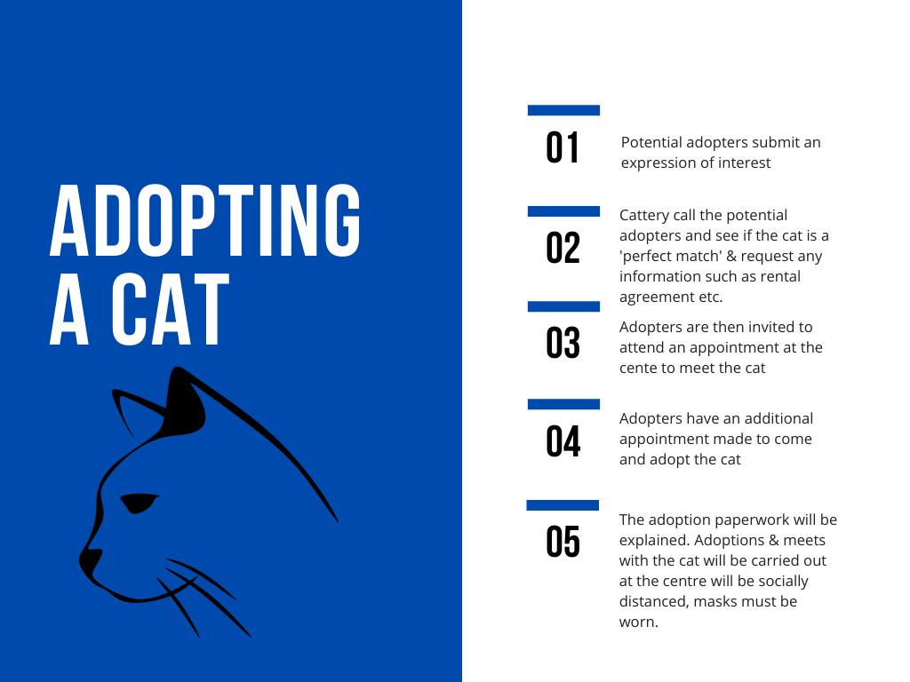 Cat adoption process