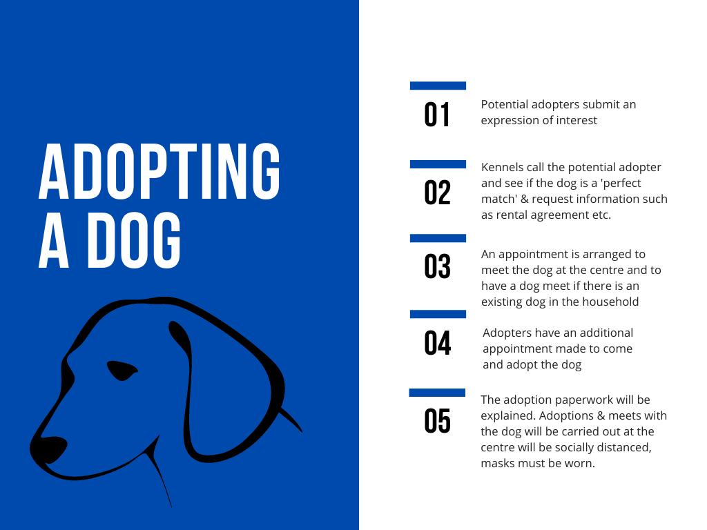 Dog adoption process