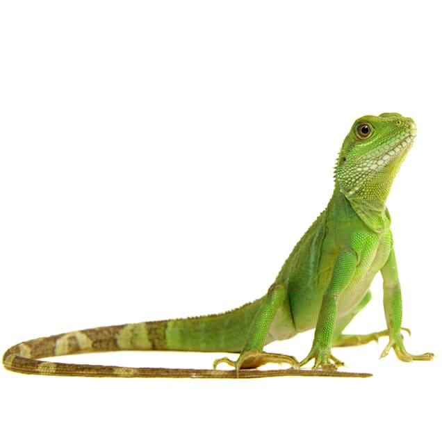 Reptile Awareness Day 2021